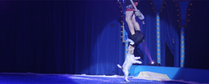 Training of a stage costume – by a dog…